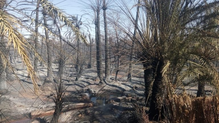 حريق أسوان طال أشجار النخيل