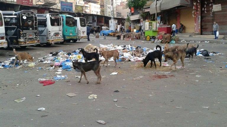 الحيوانات الضالة تهدد حياة المواطنين