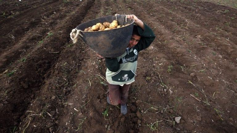 أزمة البطاطس في مصر