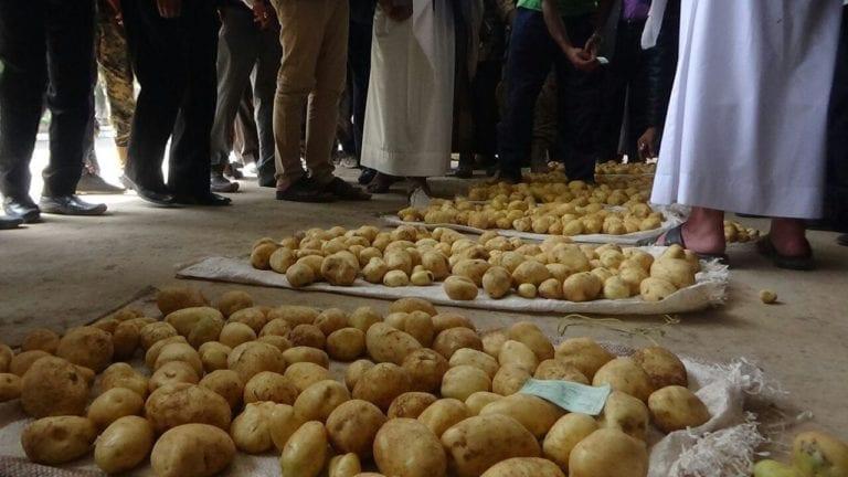 حظر تخزين البطاطس