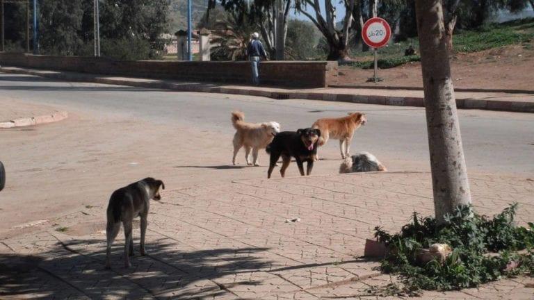 تصدير الكلاب والقطط
