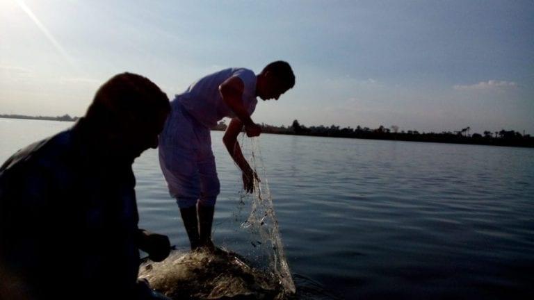 إنتاج الأسماك في مصر