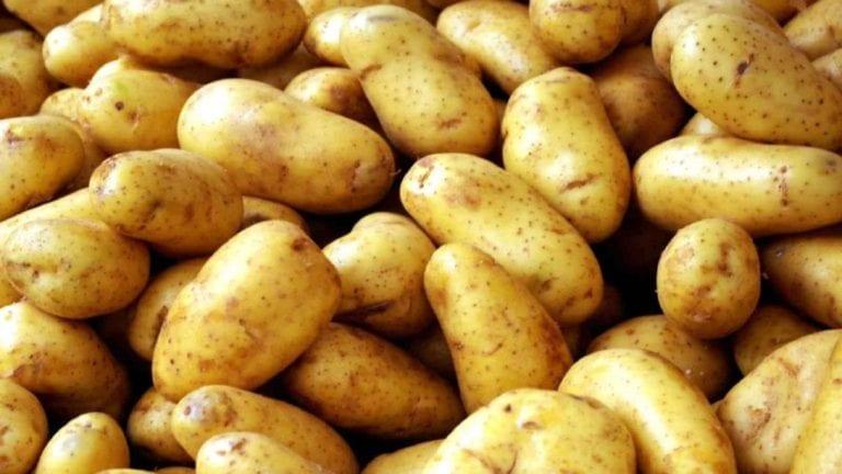 تصدير البطاطس إلى الخارج