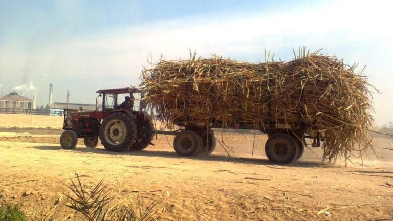 """""""التموين"""": ستة مصانع تستعد لاستقبال محصول قصب السكر"""