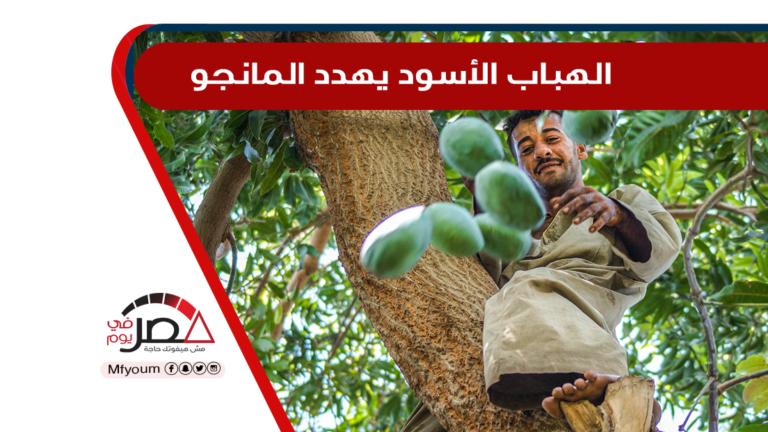 مزارع الفاكهة في مصر