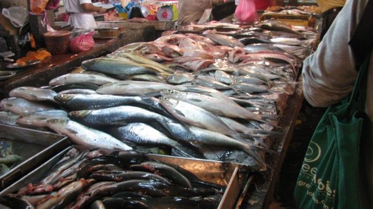 إلغاء رسم الصادرات.. هل ترتفع أسعار الأسماك بالأسواق؟