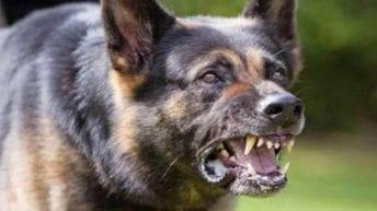 """القصة الكاملة لاعتداء كلبين على """"طفل مدينتي"""""""