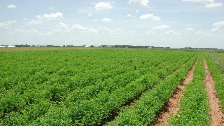 الإصلاح الزراعي: 44.5 مليون جنيه إيرادات بيع أراضي خلال فبراير
