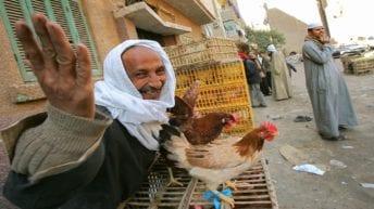 تأجيل حظر تداول الدواجن الحية حتى انتهاء شهر رمضان