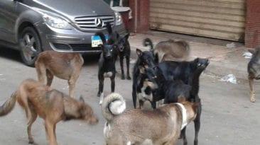 حملات للقضاء على الكلاب الضالة في الإسكندرية