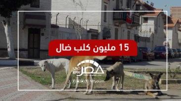 انتشار الحيوانات الضالة في مصر.. هل تكفي الفتاوى والقوانين؟