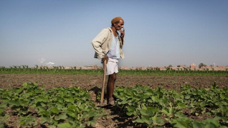 شكاوى بسبب الشروط السعودية على الصادرات الزراعية المصرية