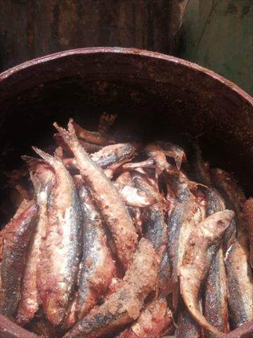 أسماك مملحة