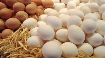 تصدير بيض المائدة