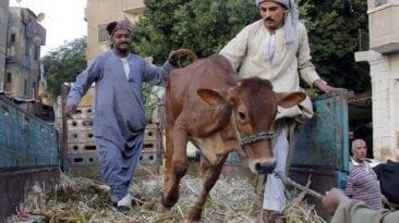 نصائح للحفاظ على الثروة الحيوانية والداجنة خلال الموجة الحارة