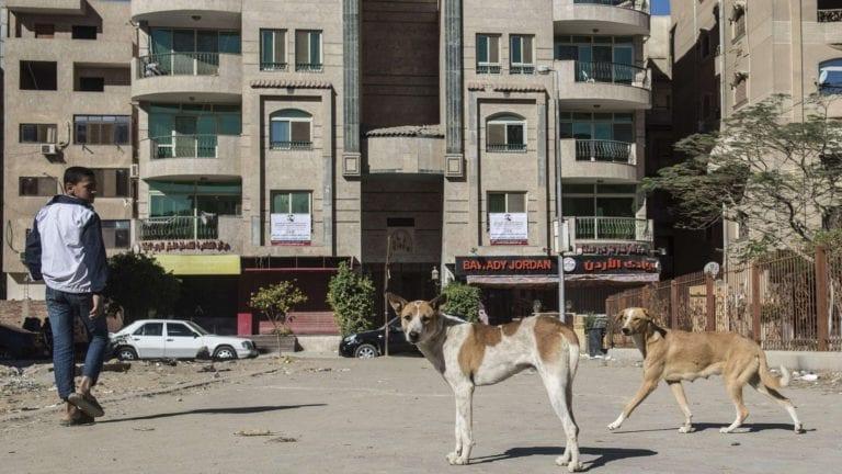 الصحة: 129 ألف حالة إصابة بالعقر نتيجة ظاهرة الكلاب الضالة