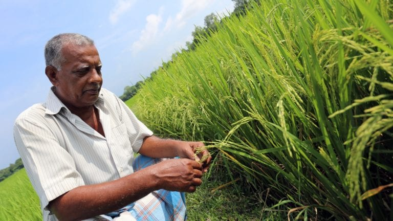 """الحصاد: البورصة تخسر 63.7 مليار جنيه في مايو.. و""""الحشرة الفتاكة"""" تدخل مصر"""
