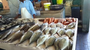 الغرفة التجارية: أسعار الأسماك والدواجن سترتفع بعد زيادة الكهرباء