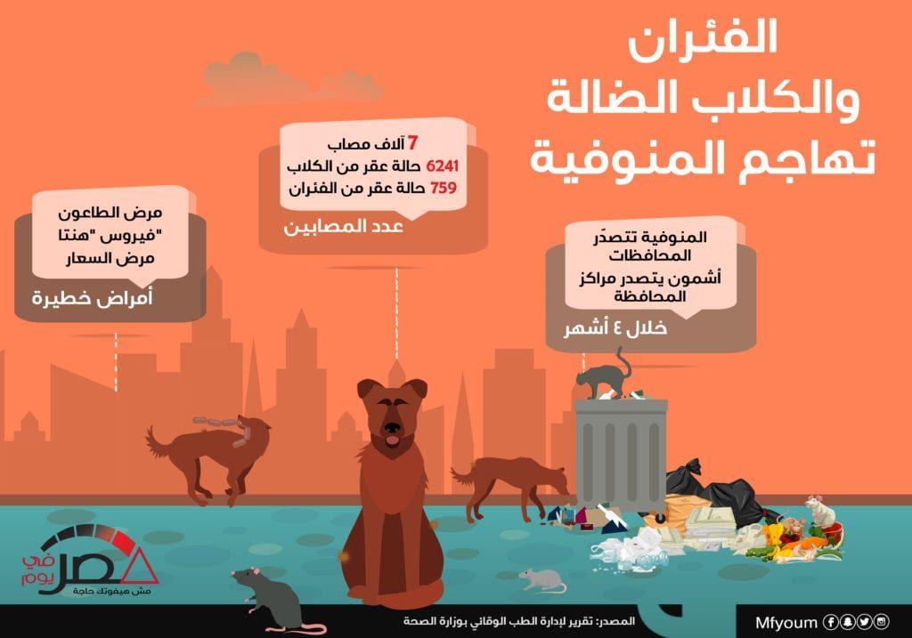 الفئران والكلاب الضالة تهاجم المنوفية (إنفوجراف)