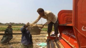 الحصاد: التصالح مع متهمين في قضية فساد القمح.. وزيادة رسوم وثائق الأحوال المدنية
