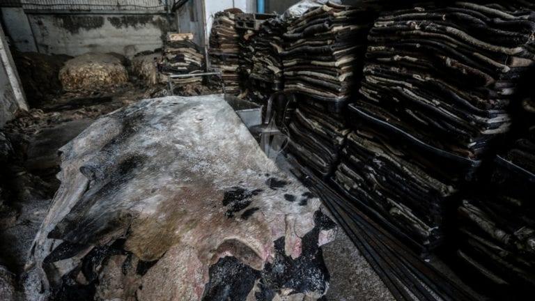 إلقاء جلود أضاحي في المصارف بعد ركود بيعها: خسائر وأضرار