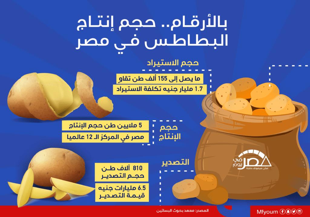 بالأرقام.. حجم إنتاج البطاطس في مصر (إنفوجراف)