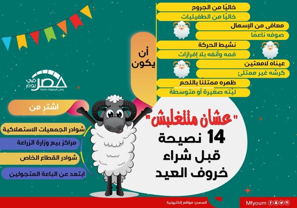 """""""عشان متتغلبش"""".. 14 نصيحة قبل شراء خروف العيد (إنفوجراف)"""