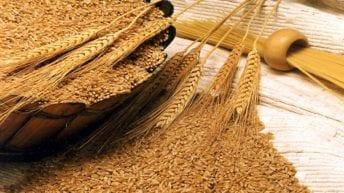 التمثيل التجاري بموسكو يوصي بفحص الواردات المصرية من القمح
