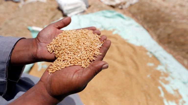 مصر تشدد إجراءات استيراد القمح بعد الانفجار النووي الروسي