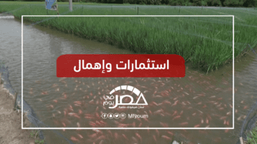 كنز مهدد بالأمراض والتلوث.. من ينقذ الثروة السمكية في مصر؟