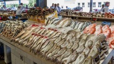 """""""التموين"""" تعلن تخفيض أسعار السمك"""