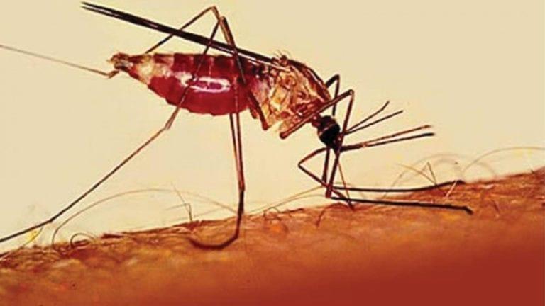 احتجاز حالات إصابة بالملاريا الخبيثة في حميات أسوان.. تفاصيل