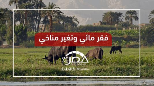 الأمن الغذائي المصري.. ماذا يواجه من أخطار؟