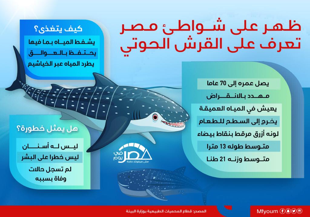 ظهر على شواطئ مصر.. تعرّف على القرش الحوتي (إنفوجراف)