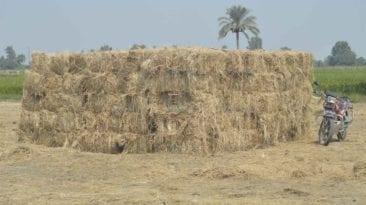 تحويل قش الأرز إلى أخشاب
