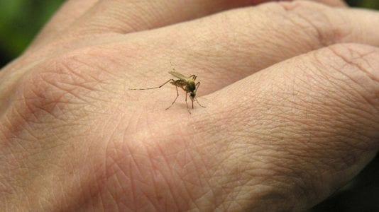 وفاة شخصين بسبب مرض الملاريا
