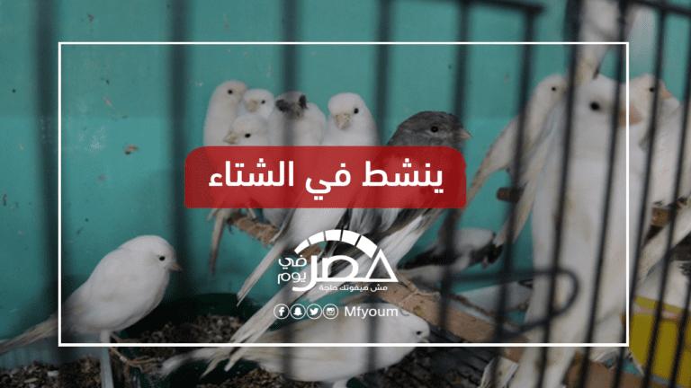 منع استيراد عصافير الزينة.. كيف تواجه الدولة إنفلونزا الطيور؟