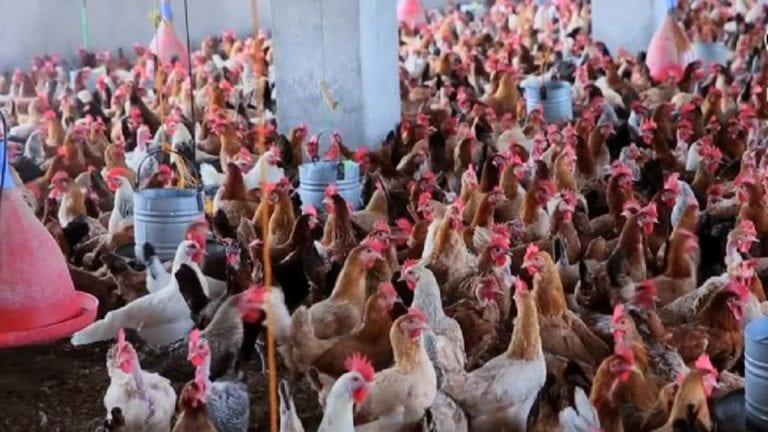 توجيهات من الزراعة لمنتجي الثروة الحيوانية والداجنة: تدفئة العناير