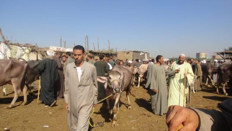 الحصاد: استبعاد 10% من دعم تكافل وكرامة.. وتعليق استيراد الماشية من السودان