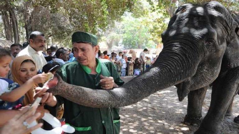 """وفاة """"نعيمة"""" آخر أفيال حديقة الحيوان بالجيزة"""