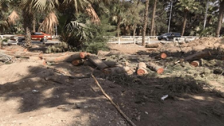 أول تعليق حكومي على قطع الأشجار بمصر الجديدة