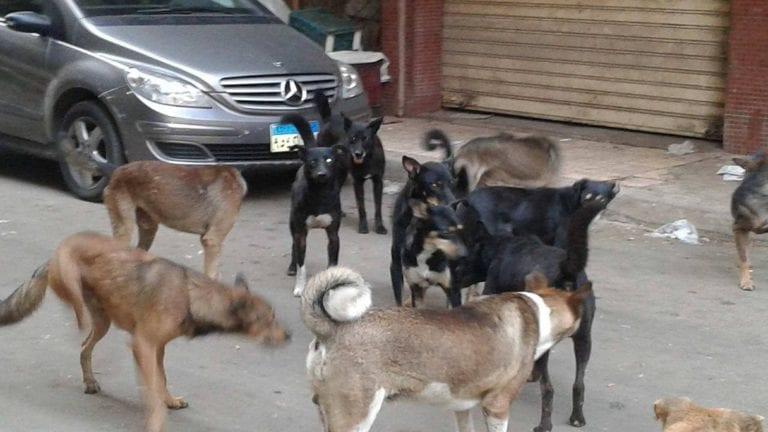 قتل الكلاب الضالة في الإسكندرية