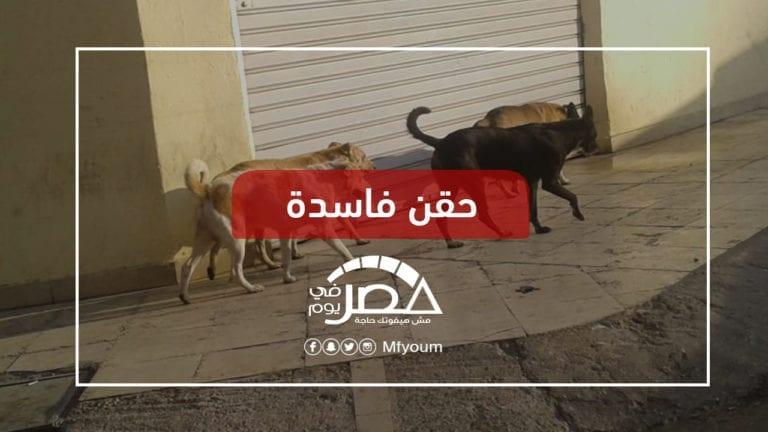 قتل الكلاب الضالة بالرصاص والسم