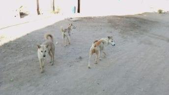 """إخلاء سبيل 4 متهمين في """"قتل كلب المطرية"""" وإحالتهم لمحاكمة عاجلة"""