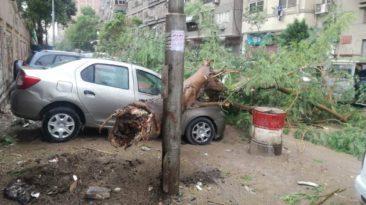 مصرع 4 أشخاص بسبب الأمطار: سقوط أشجار وصعق أعمدة
