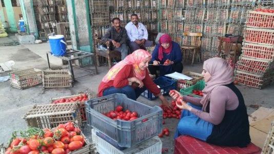 الحصاد: تحذير من ارتفاع أسعار الطماطم.. والصحة تعلن ضوابط صلاحية الأدوية