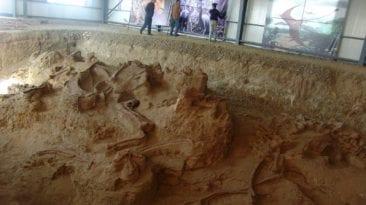 اكتشاف حفرية زاحف بحري عملاق في الوادي الجديد: عمره 70 مليون سنة