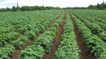 البرلمان يوافق على مشروع قانون الزراعة العضوية: غذاء صحي