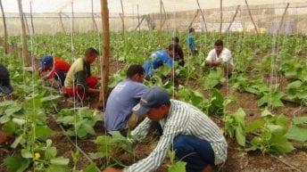 رفع الحظر عن الصادرات المصرية