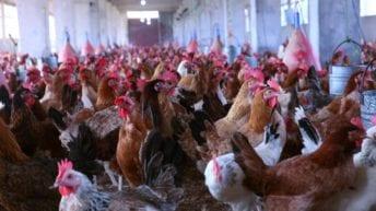 الحصاد: ارتفاع أسعار الدواجن والبيض.. وانقطاع الكهرباء في مطروح لمدة 12 ساعة